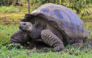 Tortoise thought to be extinct found on Galapagos Island